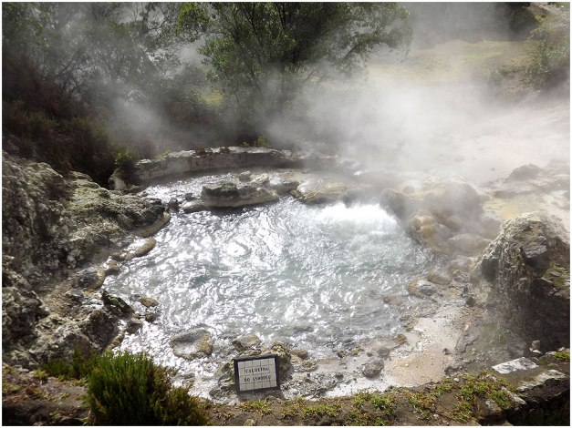 One of the hot springs up close, but not too close...they are hot!